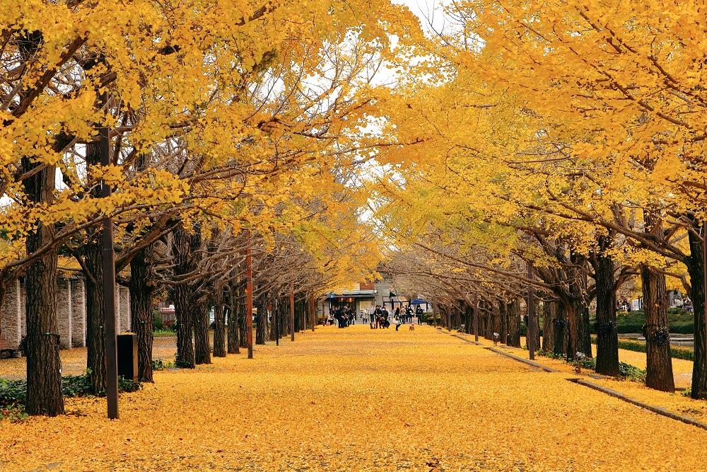 秋高氣爽出遊去!快看不可錯過的金黃秋景