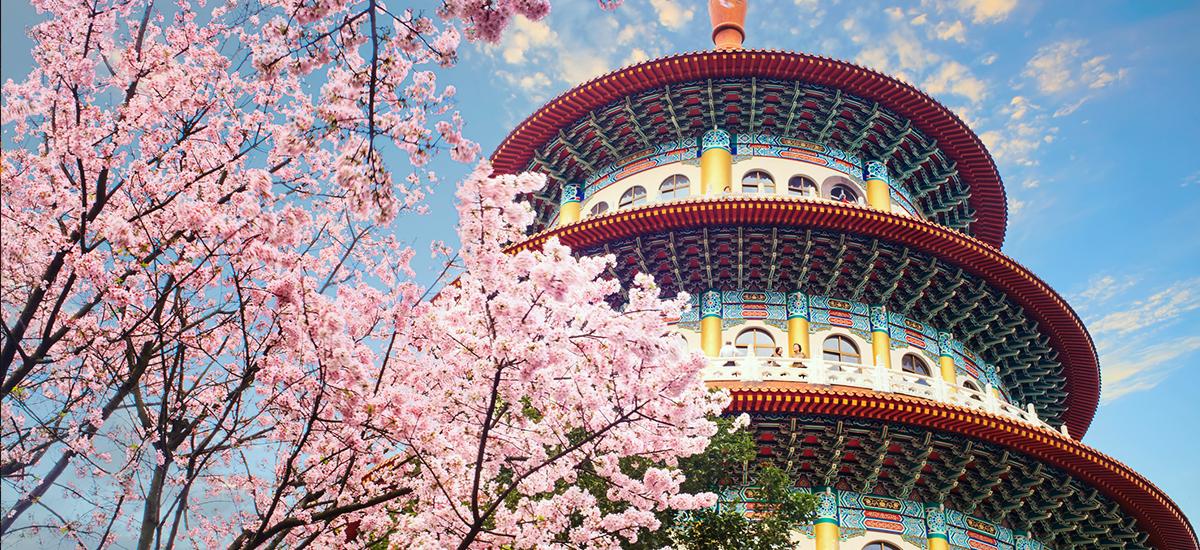 國內旅遊都能盡情欣賞櫻花