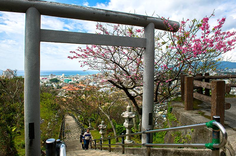 沖繩櫻花祭攻略大全