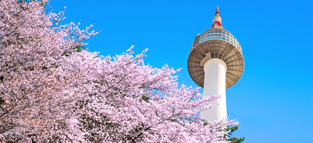 盤點韓國最美賞櫻花地點:首爾塔