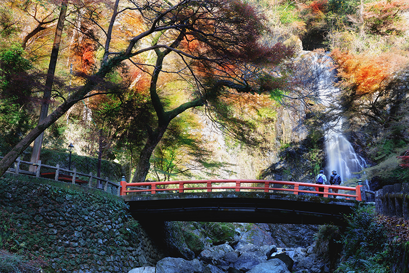 大阪箕面瀑布楓葉