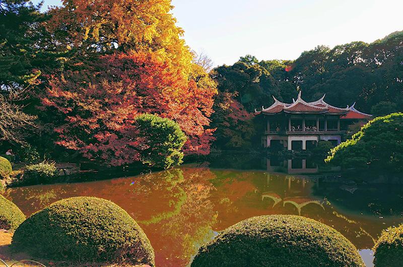 東京新宿御苑楓葉