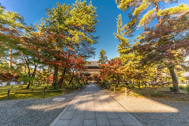 京都禪林寺楓葉