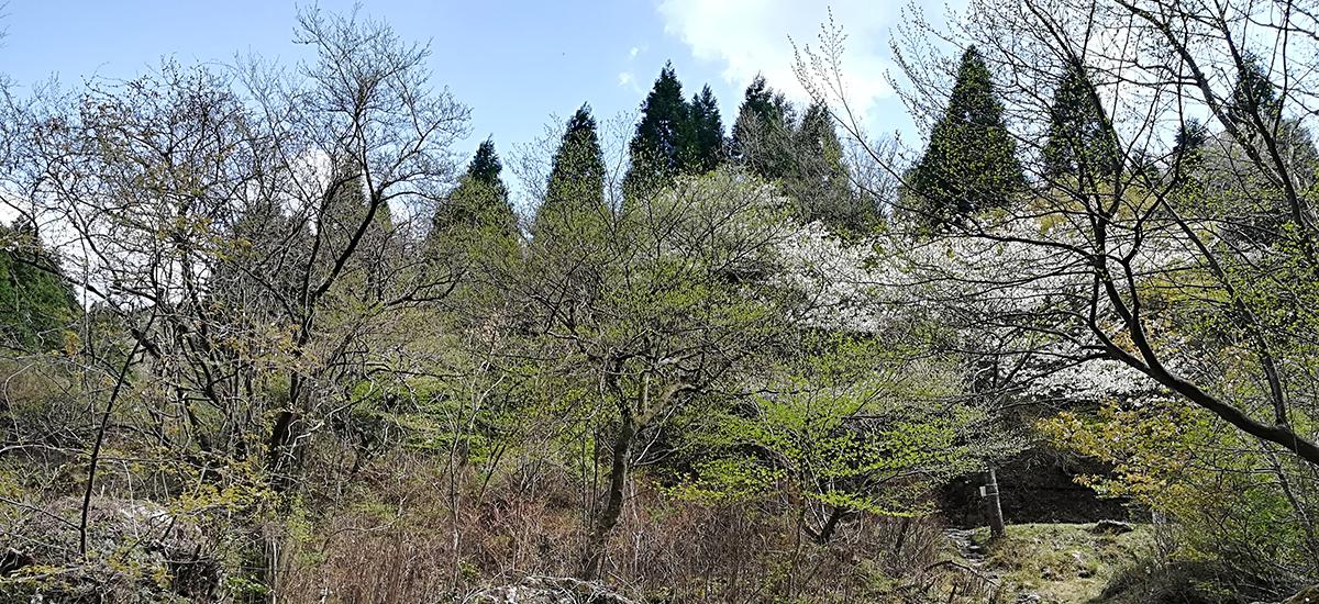 日本別府天然溫泉