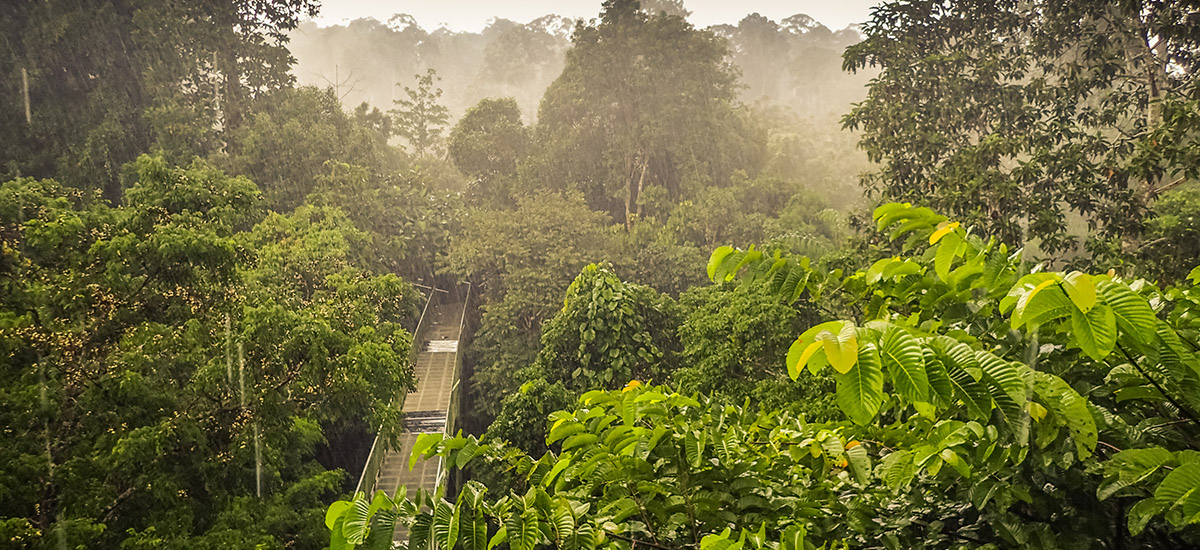 【圈點全球熱帶雨林】哪座綠色島嶼,最接近你的旅行目的地?